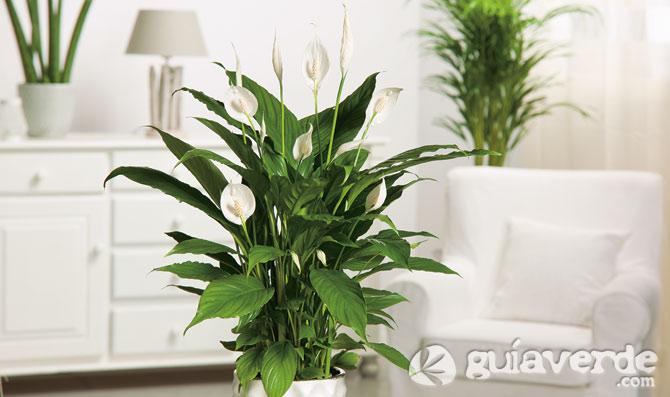 Im genes de plantas de interior im genes - Macetas para plantas de interior ...